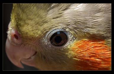 uma - parrot