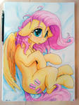 traditional Fluttershy 2