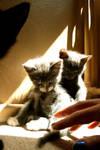 Cats Catz Catsh