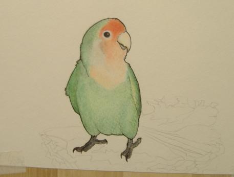 WIP Lovebird by FoxedFerret