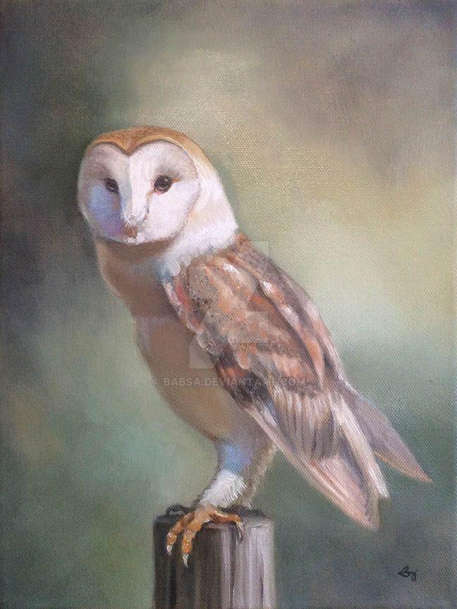 Barn Owl (oil) by Babsa