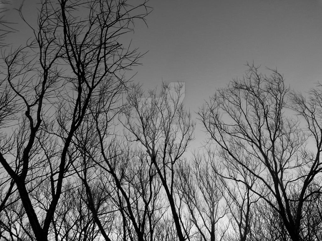 Dark Dead Trees by kandi