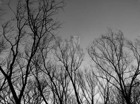 Dark Dead Trees