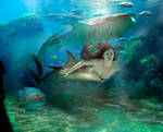 The shark queen Mermaid