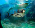The shark queen Mermaid v2