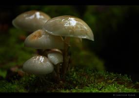 Mushrooms by Nightc0m