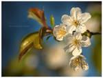 Flower by Nightc0m