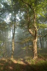 Morning Sun by woisvogi