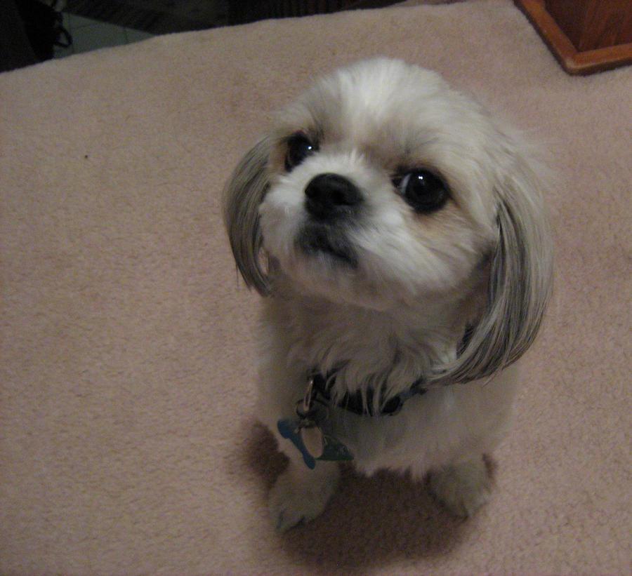 A Wild Rebel Dog Has Appeared!! by TealHikari