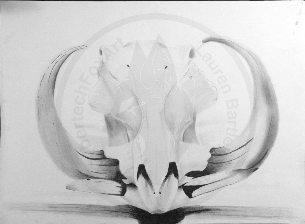 Warthog Skull by CybertechFoxArt on DeviantArt