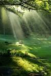 Nature Photo Study