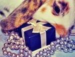 Christmas bunny II