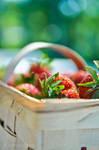 Strawberry days...