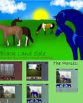 Black Land Horse Sale