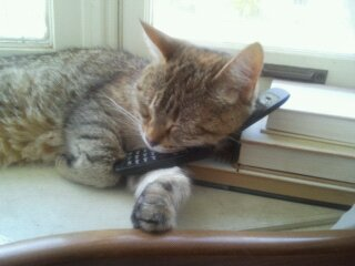 kitty on the phone by Moongirl91939