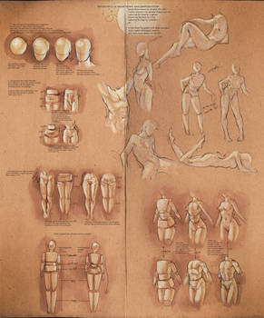 Simplify Human Anatomy guide