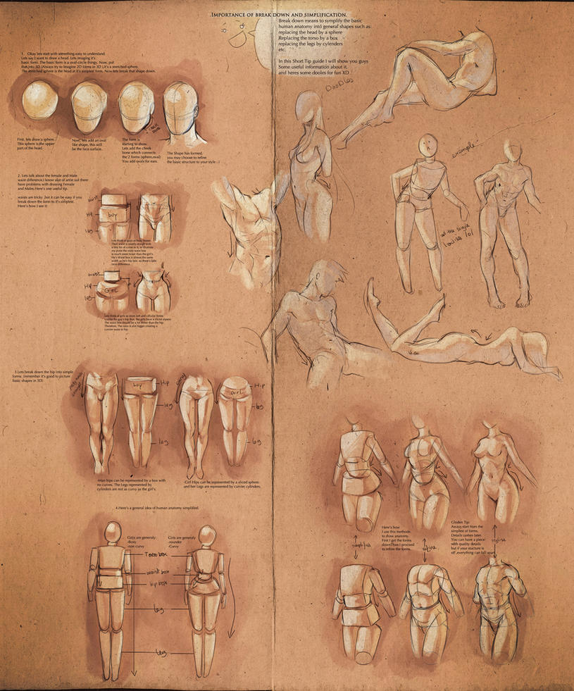 Simplify Human Anatomy Guide By Sakimichan On Deviantart