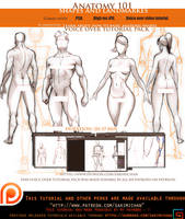 Anatomy 101 Shapes/landmarke .Voice over tutorial. by sakimichan