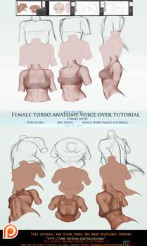 Female torso anatomy voice over .promo.