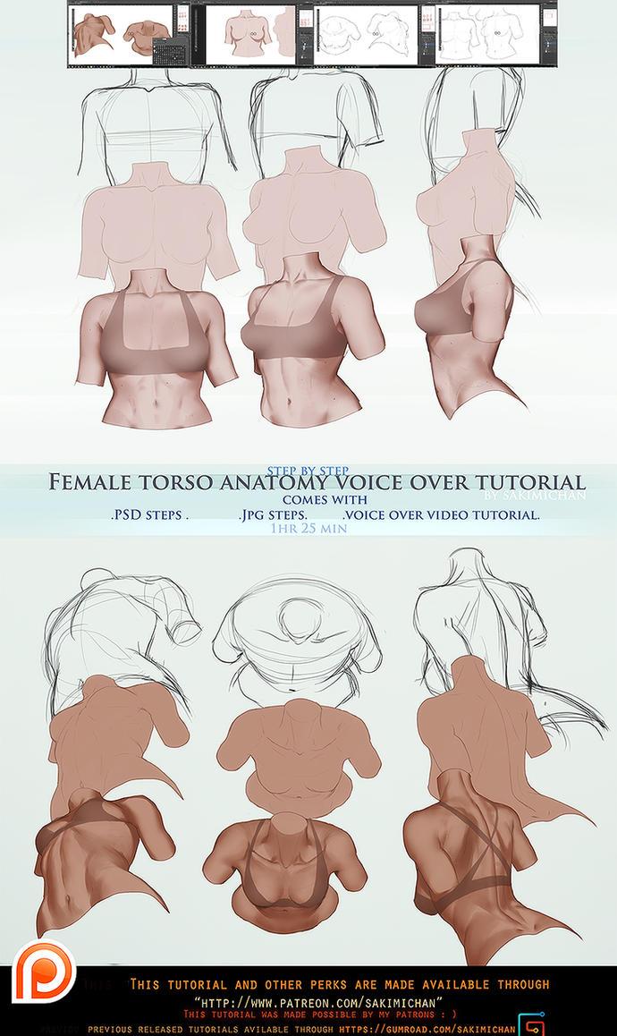 Female torso anatomy voice over .promo. by sakimichan on DeviantArt