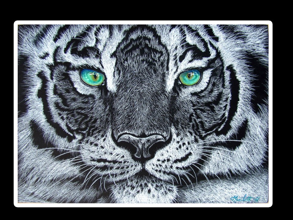 White Tigers With Green Eyes The White Tiger With GreenWhite Tigers With Green Eyes