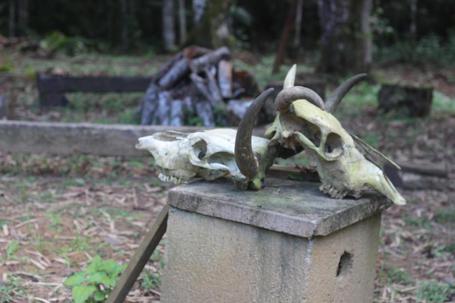 skull bull by Lais-Pinheiro