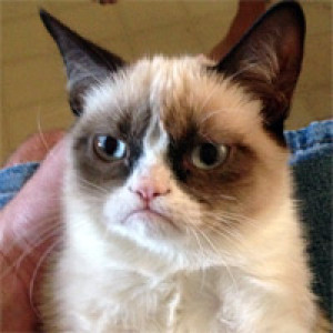 grumpy-catplz's Profile Picture