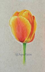 Tulip by AquaVarin