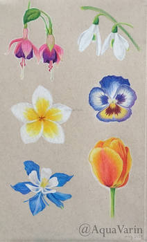 Toned paper flowers