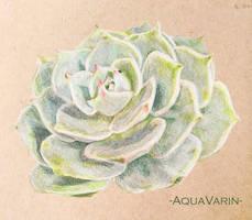 Stone rose by AquaVarin