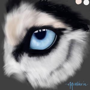 Husky eye study: Digital painting 18/??? by AquaVarin