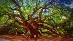 memories seep from my veins (angel oak)
