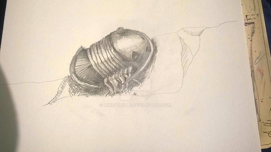 Trilobit by Mikrowelle