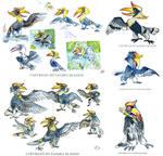 Hornbill Sketches