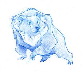 Furry Sun Bear