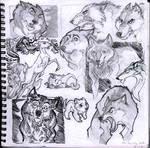 Wolf Sketch Studies