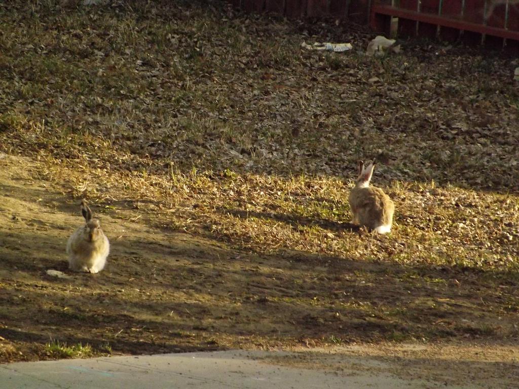 Jack Rabbits by MindlessAngel