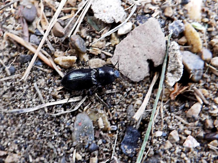 Beetles Shine by MindlessAngel