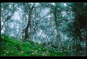 Nature by Tiefenwelten