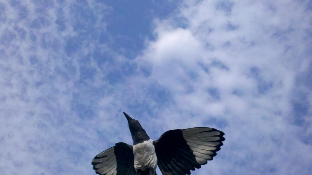 free like a bird in the sky by Kampy