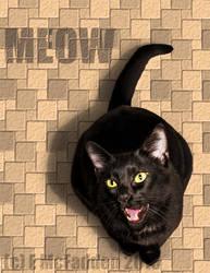 Meow by silverdragon76