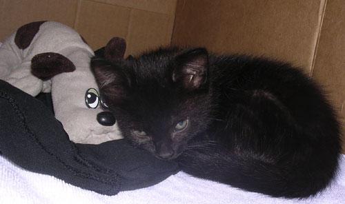 Osiris and his Pound Puppy