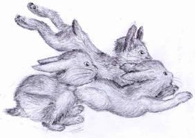 Bunny Hoard, er Herd by FrankHightower