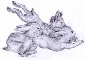 Bunny Hoard, er Herd