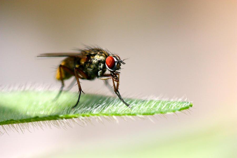 Fly Macro by MrJamieBla
