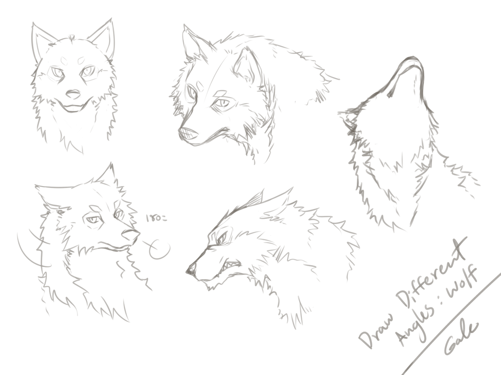Wolfs Face Angles Practicing By Galecoroco
