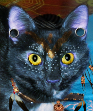 Avatar Kitty by Dino21AvP