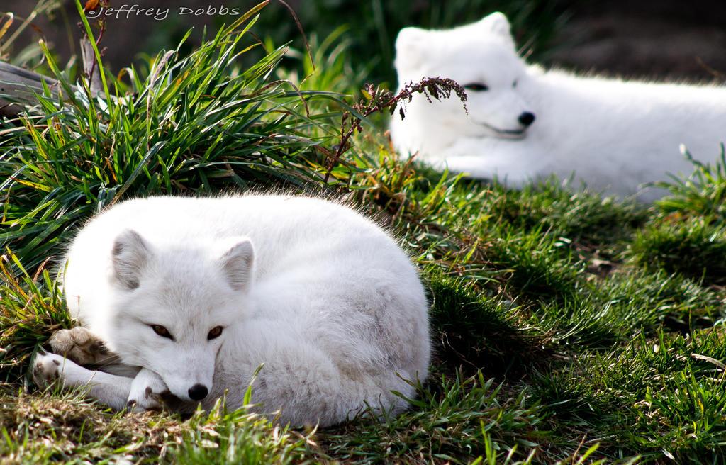 Sleepy Time by JeffreyDobbs