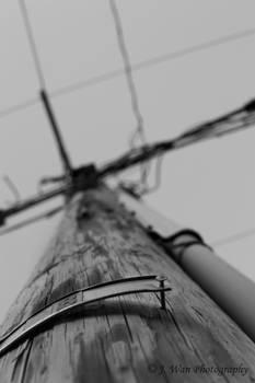Telephone Pole - Black + White