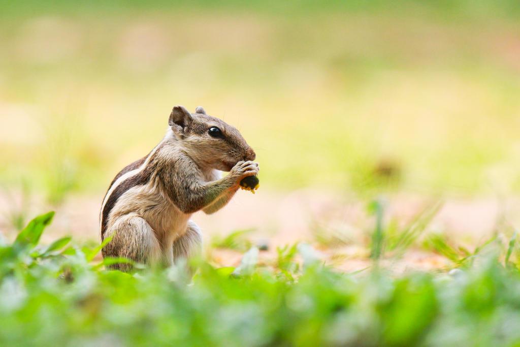 Five striped Squirrel by ThirdEyeofAtik